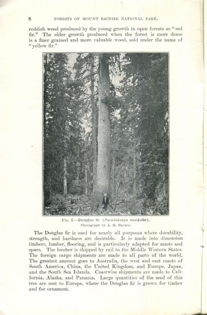 Image for The Forests of Mount Rainier National Park